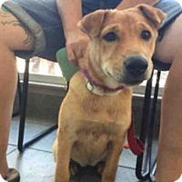 Adopt A Pet :: A393394 - San Antonio, TX