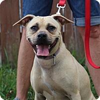 Adopt A Pet :: ZuZu - Elyria, OH