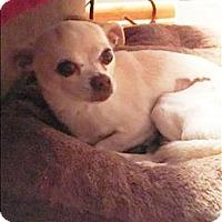 Adopt A Pet :: Dory - Columbus, OH