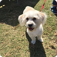 Adopt A Pet :: Nelly Rose - Los Angeles, CA