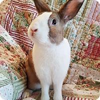 Adopt A Pet :: Jakob - Livermore, CA