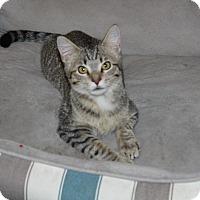 Adopt A Pet :: Fluffernutter - Wichita, KS