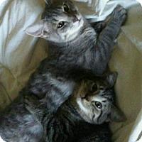 Adopt A Pet :: Nathan & Tiger Lily - Scottsdale, AZ