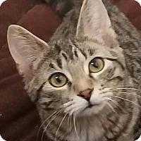 Adopt A Pet :: Darcy - Colfax, IA