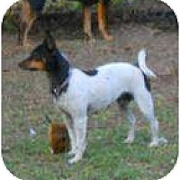 Adopt A Pet :: Snookie - Jacksonville, FL