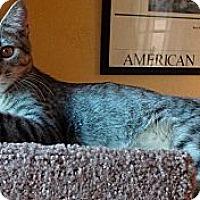 Adopt A Pet :: Rook - St. Louis, MO
