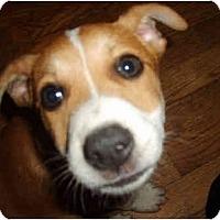 Adopt A Pet :: SKY KING - Plainfield, CT