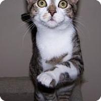 Adopt A Pet :: K-Paws1-Yuki - Colorado Springs, CO