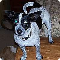 Adopt A Pet :: Maggie - Conway, AR