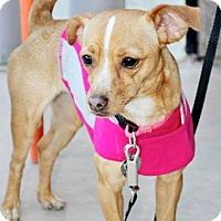 Adopt A Pet :: Janie - Scottsdale, AZ