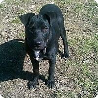 Adopt A Pet :: Jynx - Lima, OH
