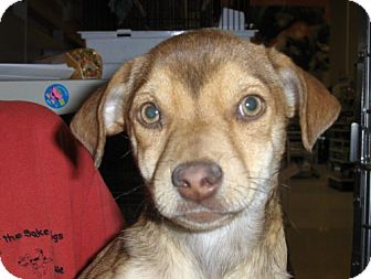 Terrier (Unknown Type, Medium) Mix Dog for adoption in Fresno, California - Dusty