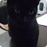 Adopt A Pet :: Drako - Hamburg, NY