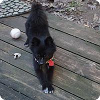 Adopt A Pet :: Omen - conroe, TX
