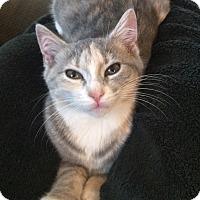 Adopt A Pet :: Sage - Colmar, PA
