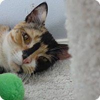 Adopt A Pet :: Betsey -Adoption Pending! - Colmar, PA