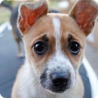 Adopt A Pet :: Victoria - Austin, TX