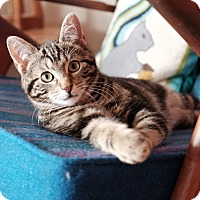 Adopt A Pet :: Pickle - Brooklyn, NY