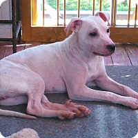 Adopt A Pet :: Gracie - Lawrenceville, GA