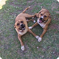 Adopt A Pet :: Buddy and Baxter - Sedona, AZ
