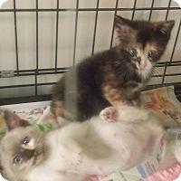 Adopt A Pet :: Clarabelly - Whitestone, NY