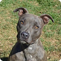 Adopt A Pet :: Avery - Santa Barbara, CA