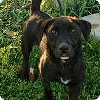 Adopt A Pet :: Holly - Aurora, IL