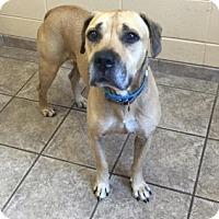 Adopt A Pet :: Wilson Vtg 110899 - Joplin, MO