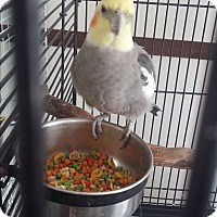 Adopt A Pet :: Loco - Punta Gorda, FL