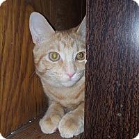Adopt A Pet :: Leo - Salem, OH