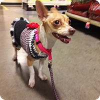 Adopt A Pet :: Magnolia - Las Vegas, NV