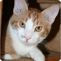 Adopt A Pet :: Eduardo - Scottsdale, AZ