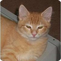 Adopt A Pet :: Gizzy - Brea, CA