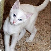 Adopt A Pet :: Frankie - Palmdale, CA