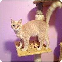 Adopt A Pet :: Patrick - Mobile, AL