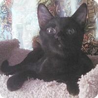 Adopt A Pet :: Spitfire2 - North Highlands, CA