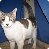 Adopt A Pet :: K-Gail3-Yuri - Colorado Springs, CO