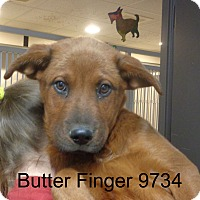 Adopt A Pet :: Butter Finger - baltimore, MD