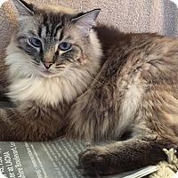 Adopt A Pet :: Mya - Davis, CA
