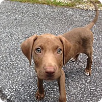Adopt A Pet :: Bristol - Cashiers, NC