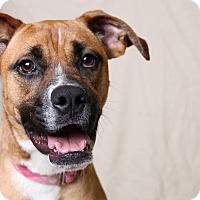 Adopt A Pet :: Bea - Jackson, TN