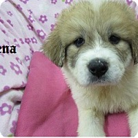 Adopt A Pet :: Zena - Bartonsville, PA