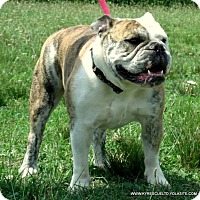 Adopt A Pet :: Serenity - Clarksville, TN