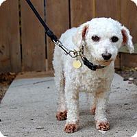Adopt A Pet :: Zelda - 10 pounds - Los Angeles, CA