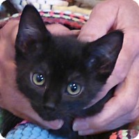 Adopt A Pet :: Murray - Fort Collins, CO