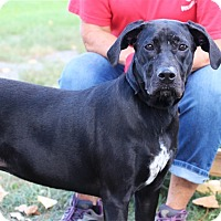Adopt A Pet :: Luna - Elyria, OH