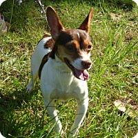 Adopt A Pet :: Monty - Conway, SC