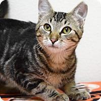 Adopt A Pet :: Buster - Dublin, CA
