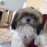 Adopt A Pet :: Lola - Birmingham, AL