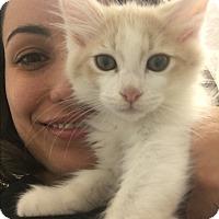 Adopt A Pet :: Bubbles - Marina del Rey, CA